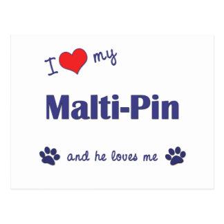 I Love My Malti-Pin (Male Dog) Postcard