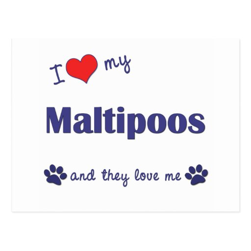 I Love My Maltipoos (Multiple Dogs) Postcard