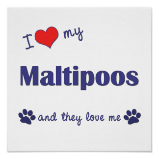 I Love My Maltipoos (Multiple Dogs) Poster Print
