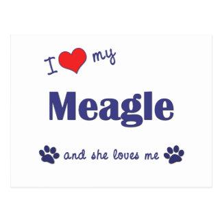I Love My Meagle (Female Dog) Postcard