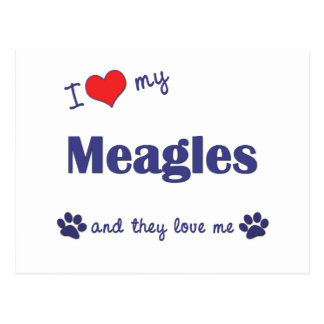 I Love My Meagles (Multiple Dogs) Postcard
