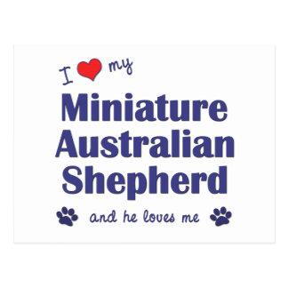 I Love My Miniature Australian Shepherd (Male Dog) Postcard
