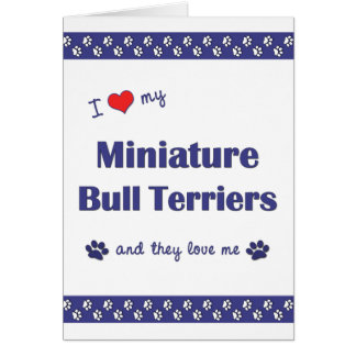 I Love My Miniature Bull Terriers (Multiple Dogs) Card