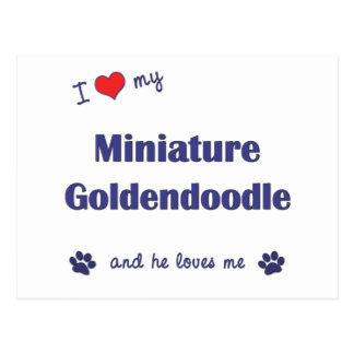 I Love My Miniature Goldendoodle (Male Dog) Postcard