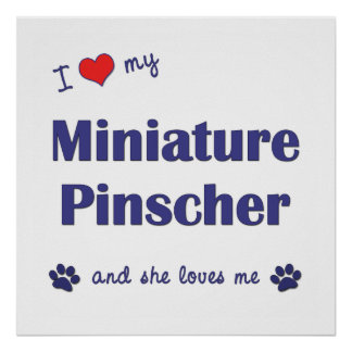 I Love My Miniature Pinscher (Female Dog) Posters