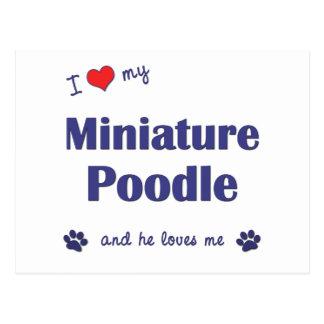 I Love My Miniature Poodle (Male Dog) Postcard