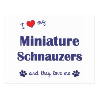 I Love My Miniature Schnauzers (Multiple Dogs) Postcard
