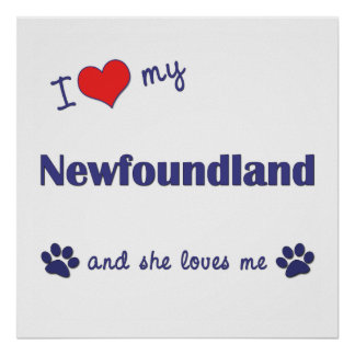I Love My Newfoundland (Female Dog) Posters
