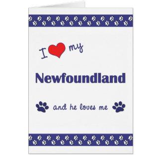 I Love My Newfoundland (Male Dog) Greeting Cards