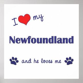I Love My Newfoundland (Male Dog) Posters