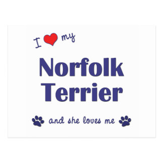 I Love My Norfolk Terrier (Female Dog) Postcard