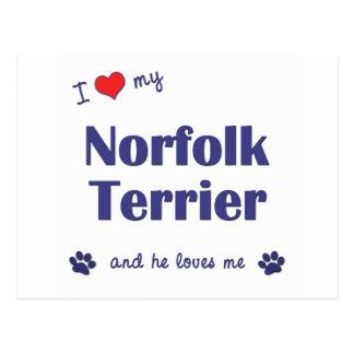 I Love My Norfolk Terrier (Male Dog) Postcard