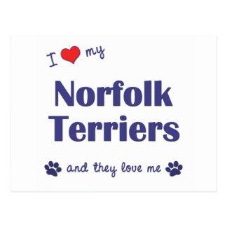 I Love My Norfolk Terriers (Multiple Dogs) Postcard