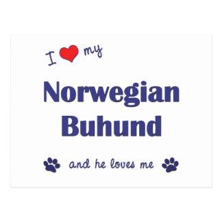 I Love My Norwegian Buhund (Male Dog) Postcard