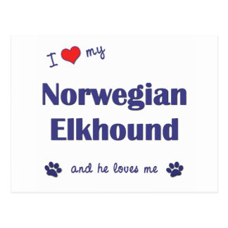 I Love My Norwegian Elkhound (Male Dog) Post Cards