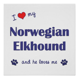 I Love My Norwegian Elkhound (Male Dog) Poster