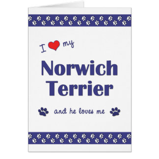 I Love My Norwich Terrier (Male Dog) Card