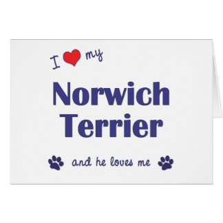 I Love My Norwich Terrier (Male Dog) Greeting Card
