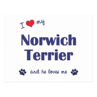 I Love My Norwich Terrier (Male Dog) Postcard