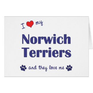 I Love My Norwich Terriers (Multiple Dogs) Greeting Card