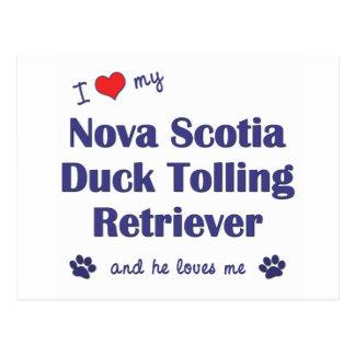 I Love My Nova Scotia Duck Tolling Retriever (He) Postcard