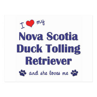 I Love My Nova Scotia Duck Tolling Retriever (She) Postcard