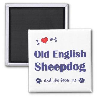 I Love My Old English Sheepdog (Female Dog) Magnet
