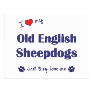 I Love My Old English Sheepdogs (Multiple Dogs) Postcard