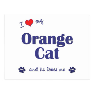I Love My Orange Cat (Male Cat) Postcard