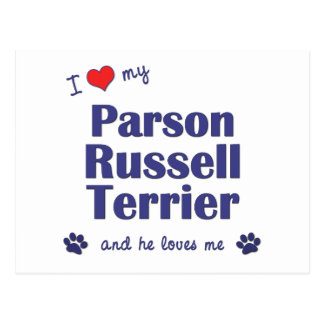 I Love My Parson Russell Terrier (Male Dog) Postcard