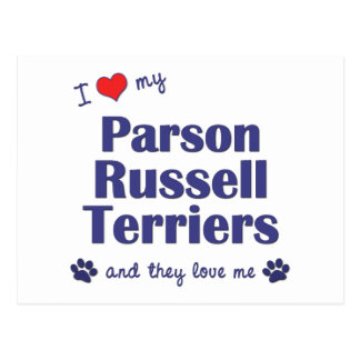 I Love My Parson Russell Terriers (Multiple Dogs) Postcard