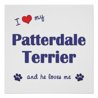 I Love My Patterdale Terrier (Male Dog) Poster