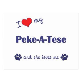 I Love My Peke-A-Tese (Female Dog) Postcard