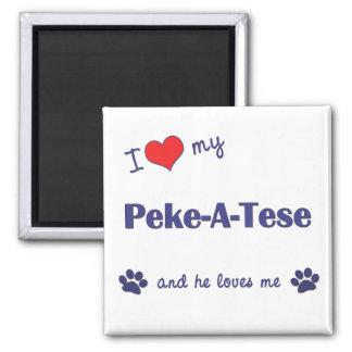 I Love My Peke-A-Tese (Male Dog) Magnet
