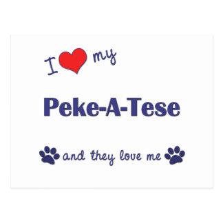 I Love My Peke-A-Tese (Multiple Dogs) Postcard