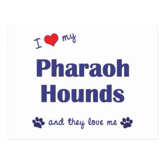 I Love My Pharaoh Hounds (Multiple Dogs) Postcard