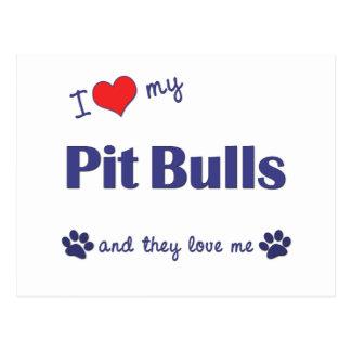 I Love My Pit Bulls (Multiple Dogs) Postcard