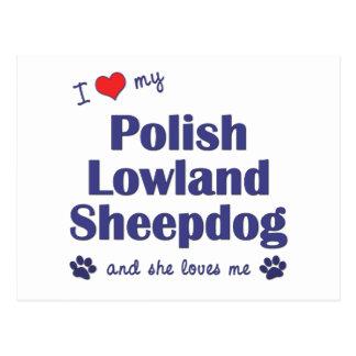 I Love My Polish Lowland Sheepdog (Female Dog) Postcard
