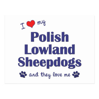 I Love My Polish Lowland Sheepdogs (Multiple Dogs) Postcard