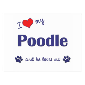 I Love My Poodle (Male Dog) Postcard