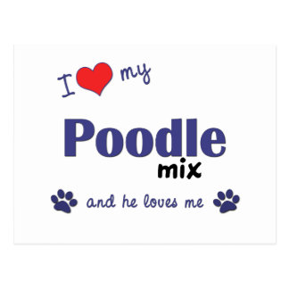 I Love My Poodle Mix (Male Dog) Postcard