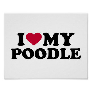 I love my Poodle Poster