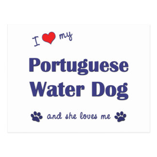 I Love My Portuguese Water Dog (Female Dog) Postcard