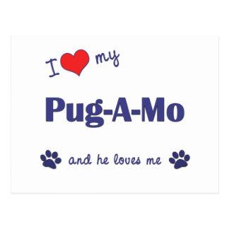 I Love My Pug-A-Mo (Male Dog) Postcard