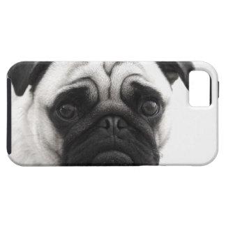 I love my Pug iPhone 5 Cover