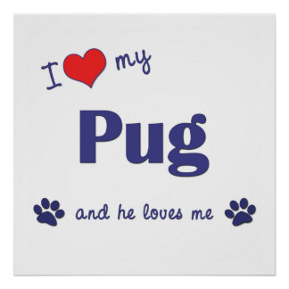 I Love My Pug (Male Dog) Posters