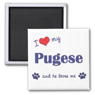 I Love My Pugese (Male Dog) Magnet