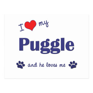 I Love My Puggle (Male Dog) Postcard