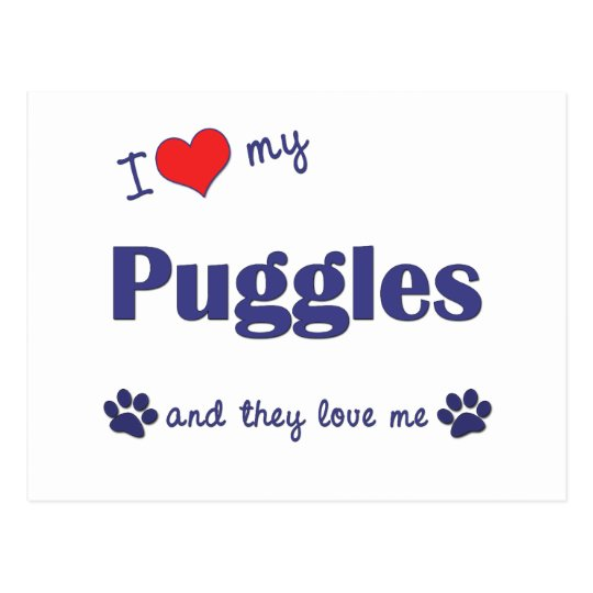 I Love My Puggles (Multiple Dogs) Postcard