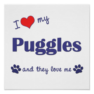 I Love My Puggles (Multiple Dogs) Poster Print